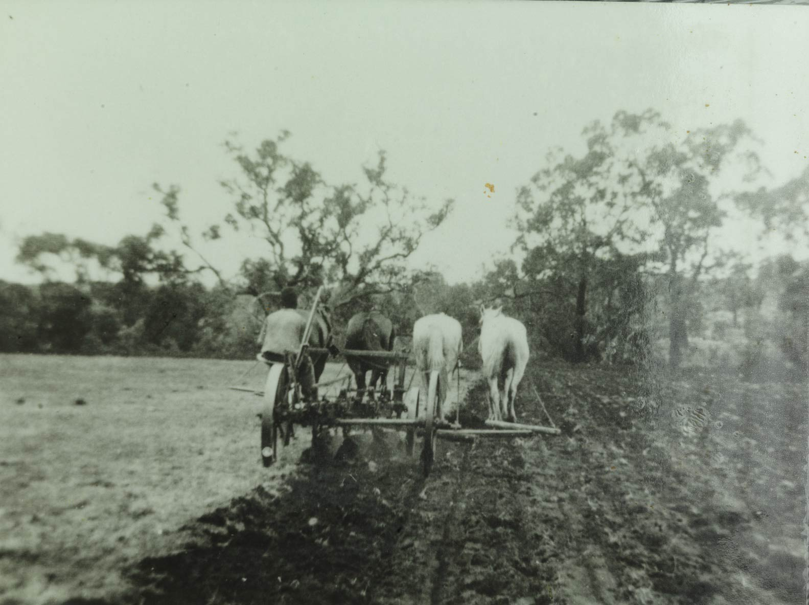 Moore River Native Settlement ploughing the farm