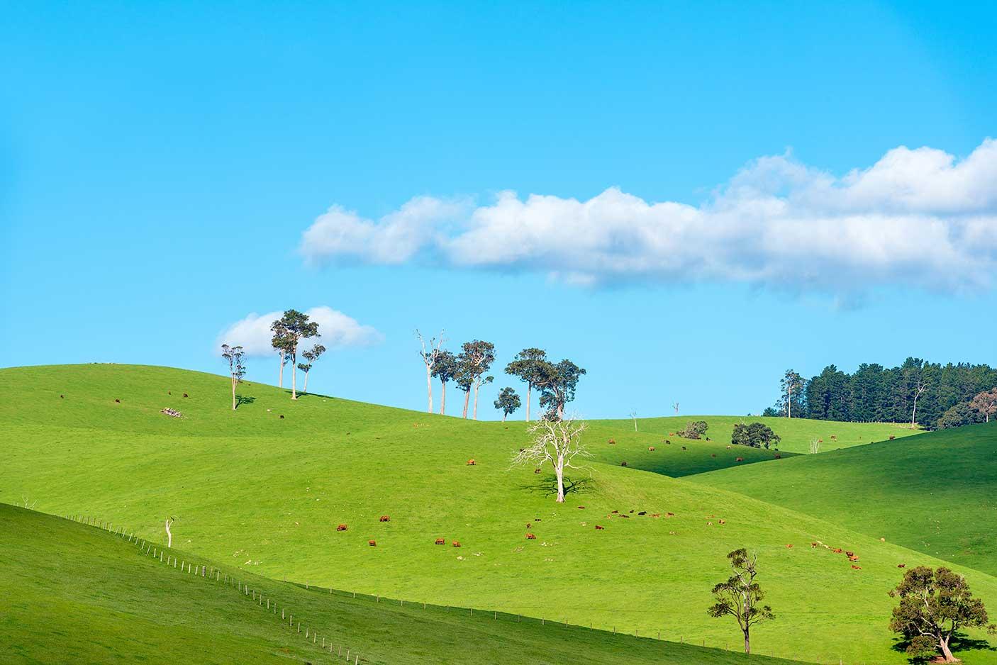 Lush green farmland hills in the south west of Western Australia
