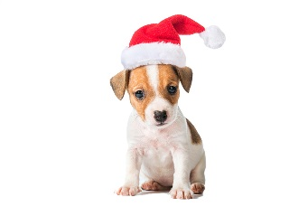 A puppy with a santa hat