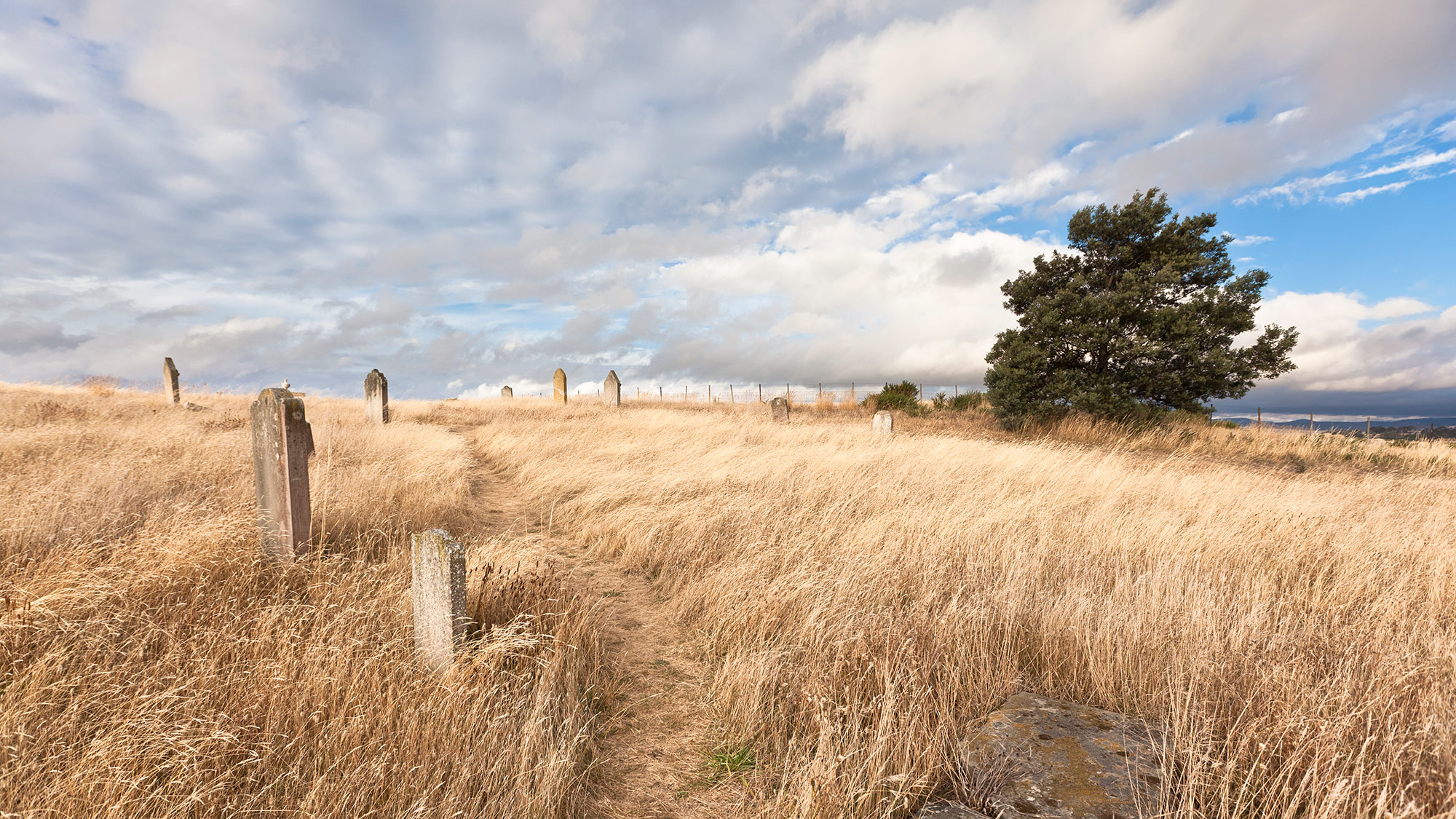 Gravestones on a grassy field