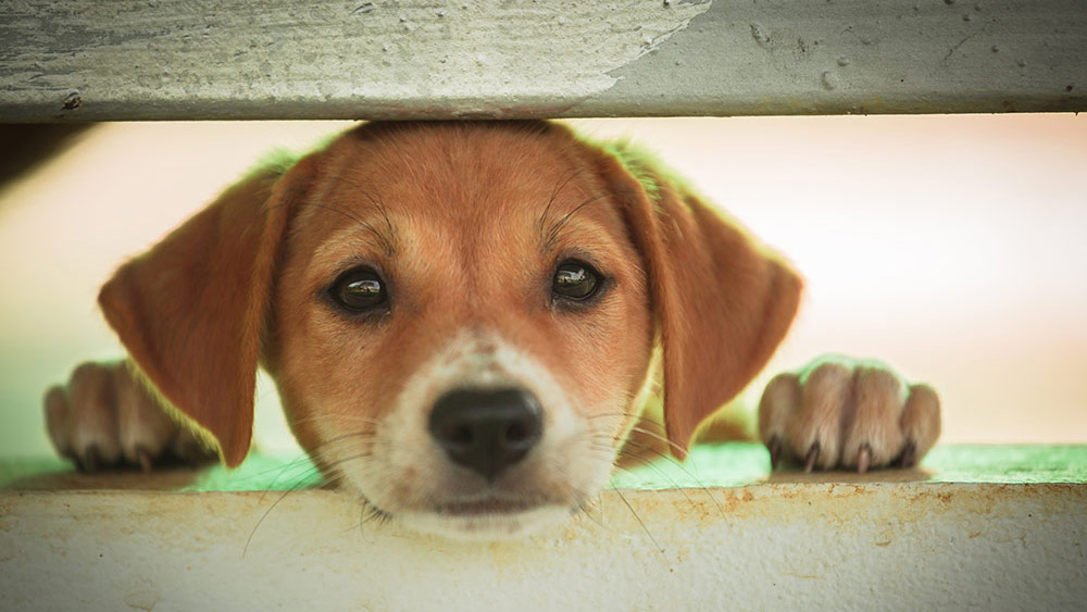 Stock image of a puppy