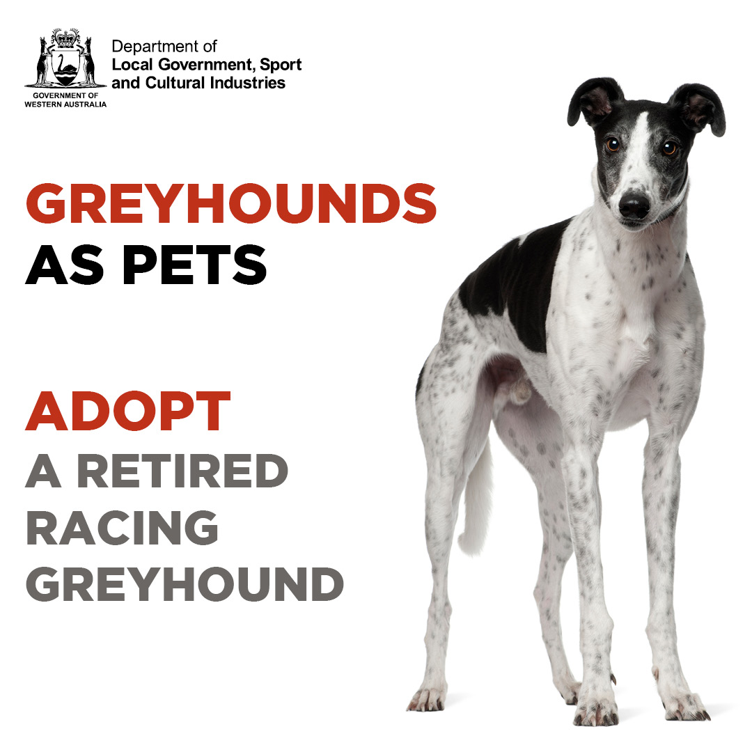 Greyhounds adoption - square social media tile
