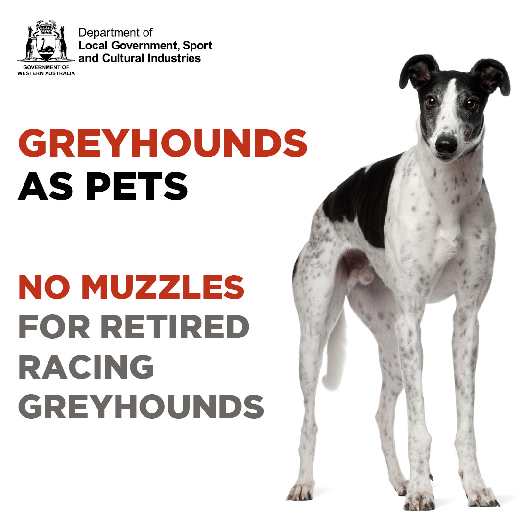 Greyhounds no muzzles - square social media tile