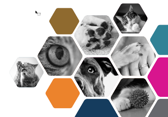 Montage of cats and dogs in hexagons