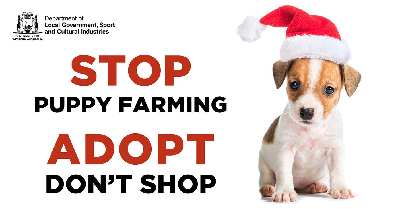 Stop pupp farming: adopt don't shop